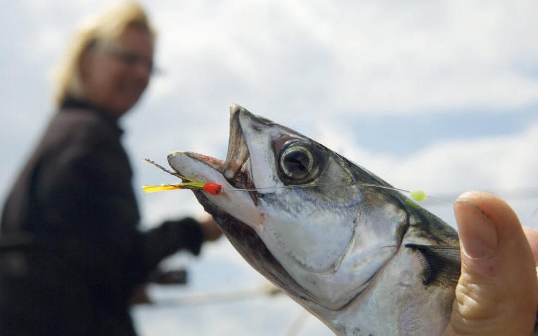 Det er altid sjovt at fange makreller, og der er virkelige gode muligheder for at dyrke det sjove fiskeri i mange af de danske havne.