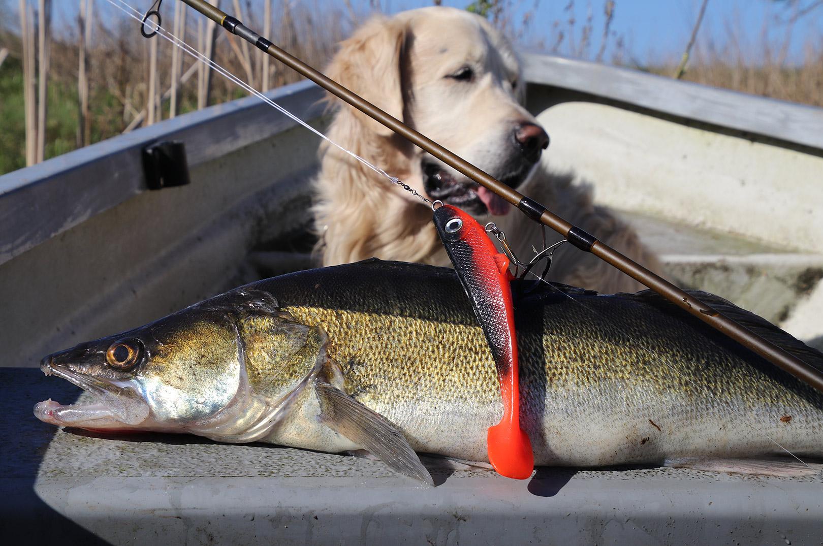 Buller er også helt vild med at fiske efter sandart fra båd.