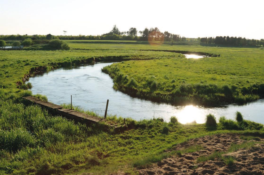 Lange strækninger af Ribe Å er uregulerede – hvem drømmer ikke om at dyppe snøren i sådan et vand?