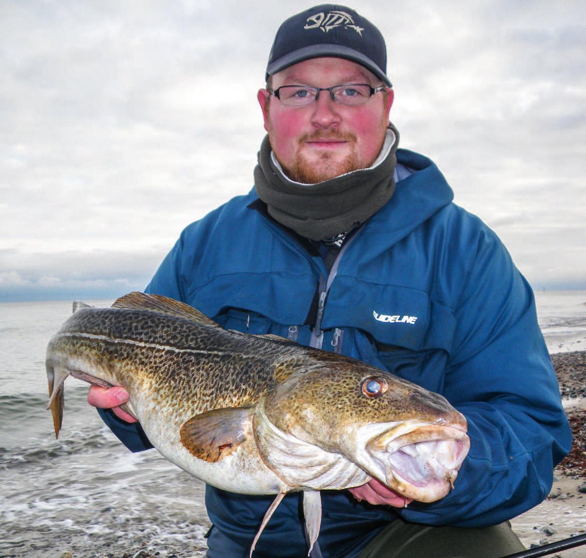 Især i november-december er østkysten leveringsdygtig i store torsk. Fisken på billedet er ikke en ualmindelig kysttorsk på Fehmarn.