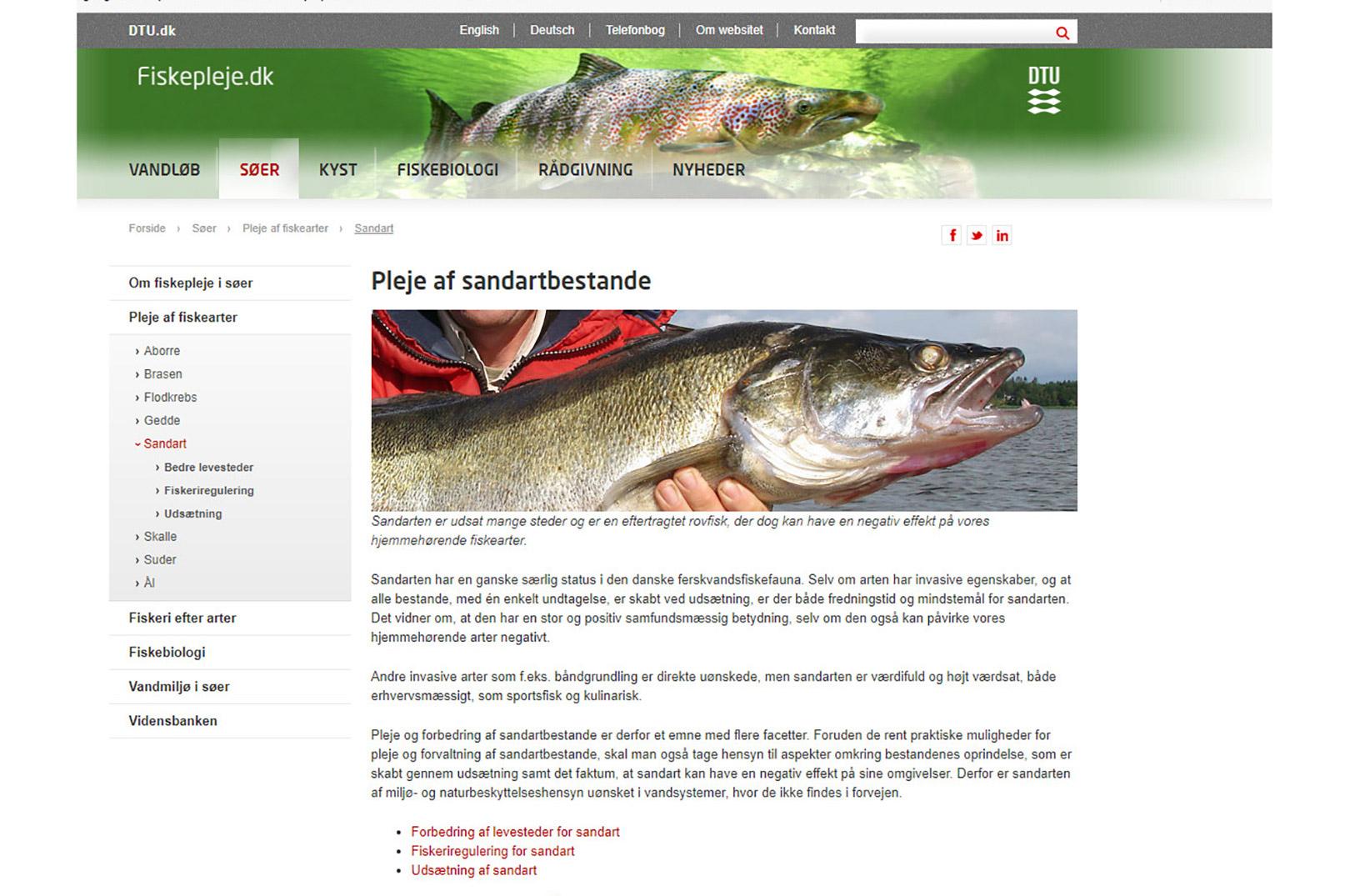 På DTU Aquas hjemmeside fiskepleje.dk kommunikeres det fejlagtigt at sandarten er ikke hjemmehørende og invasiv, hvilket i følge førende ekspreter på området er fagligt forkert.