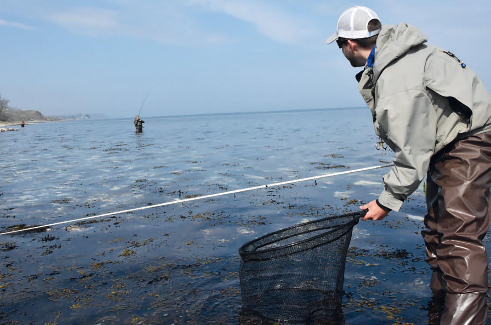 Tårup Strand: På de gode dage er der ofte mange fisk at finde på pladsen - og finder du den rette flue eller blink, kan det ofte betale sig at fortælle fiskemakkeren det, så han også kan få del i festen...