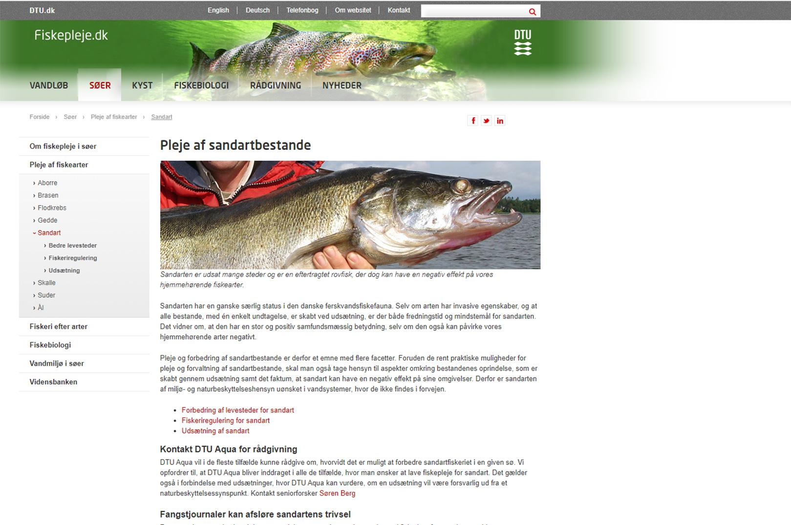 """Som du kan se pr dags dator har DTU Aqua nu fjernet teksten: """"Andre invasive arter som f.eks. båndgrundling er direkte uønskede, men sandarten er værdifuldog høj værdsat erhvervsmæssigt, som sportsfisk og kulinarisk""""."""