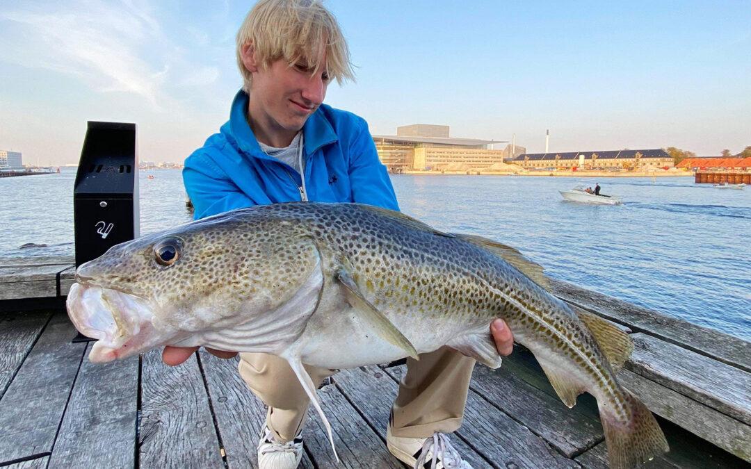 Magnus med sin flotte torsk fra Københavns Havn