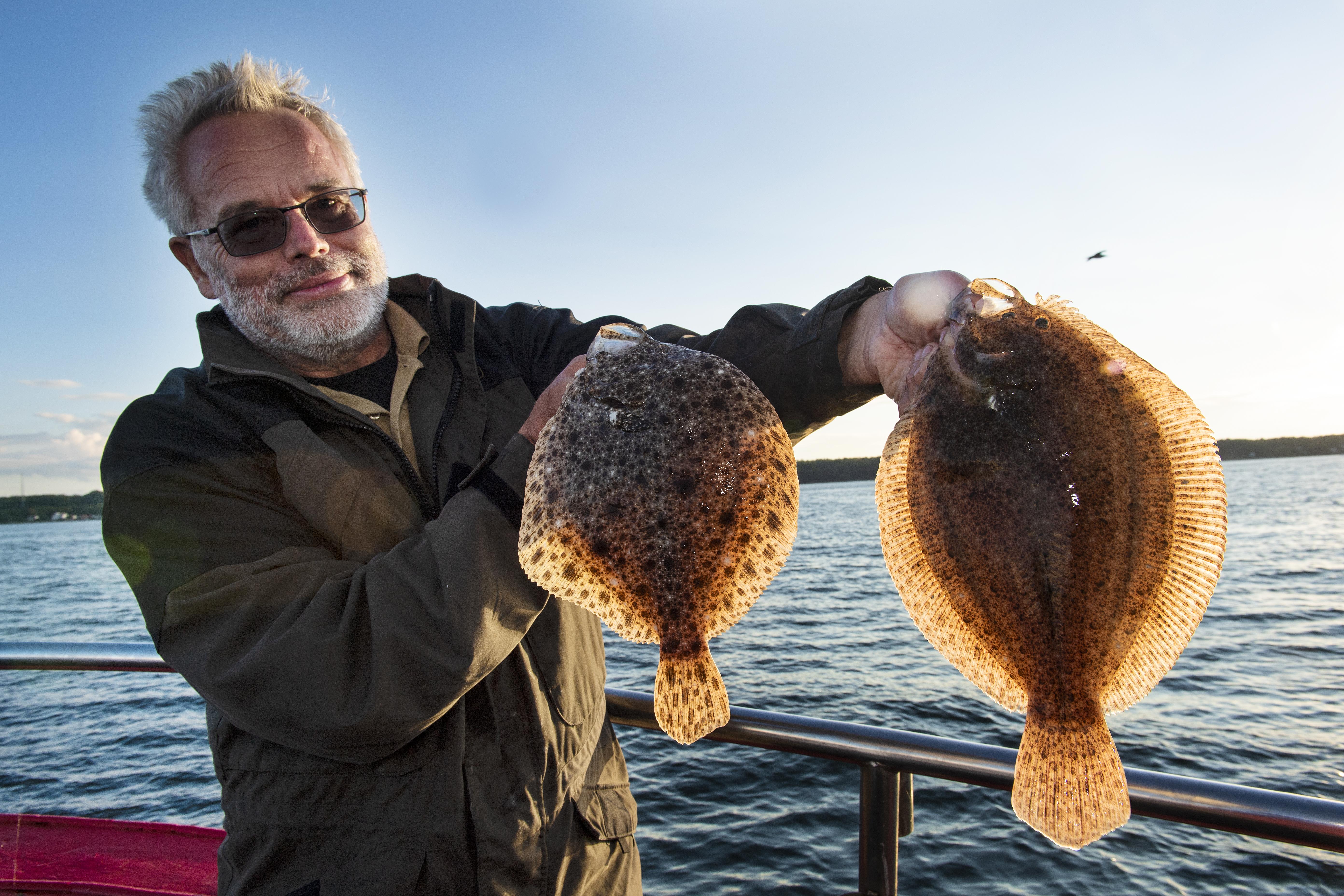 Efteråret byder på et rigtig godt hvarfiskeri på sundet. Til venstre en pighvar og til højre en slethvar.