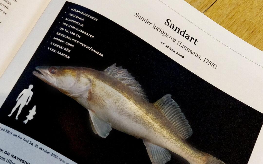 Sandarten er hjemmehørende i Danmark - et faktum DTU Aqua, som bnetales flere undrede tusinde kroner om året for at optatere viden på ferskvandsarter - desuden ikke har opdaget.