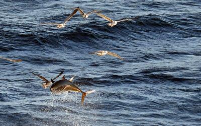 Tun up-date – stadig godt gang i fiskeriet