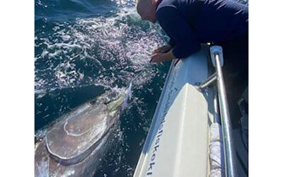 Perfekt vejr til tunfiskeriet