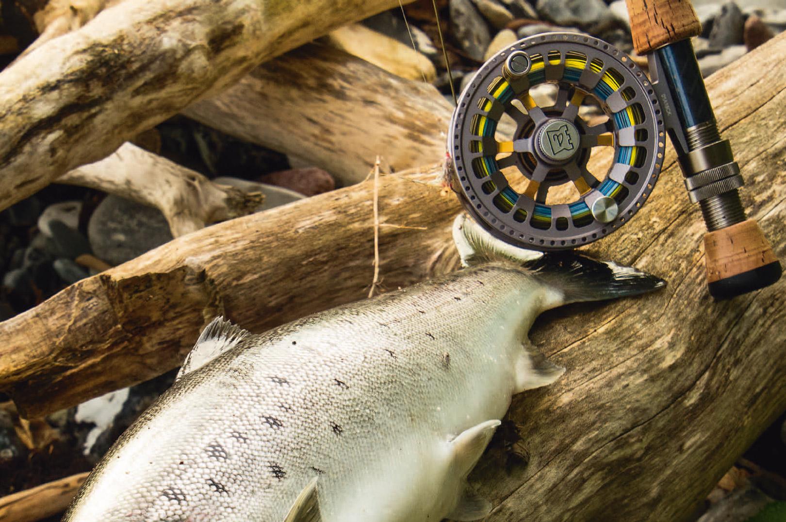 Efterårshavørrederne har smukke proportioner, og i det tidlige efterår møder man flere fisk med et let gyldent skær, der tilføjer havørreden ekstra skønhed.