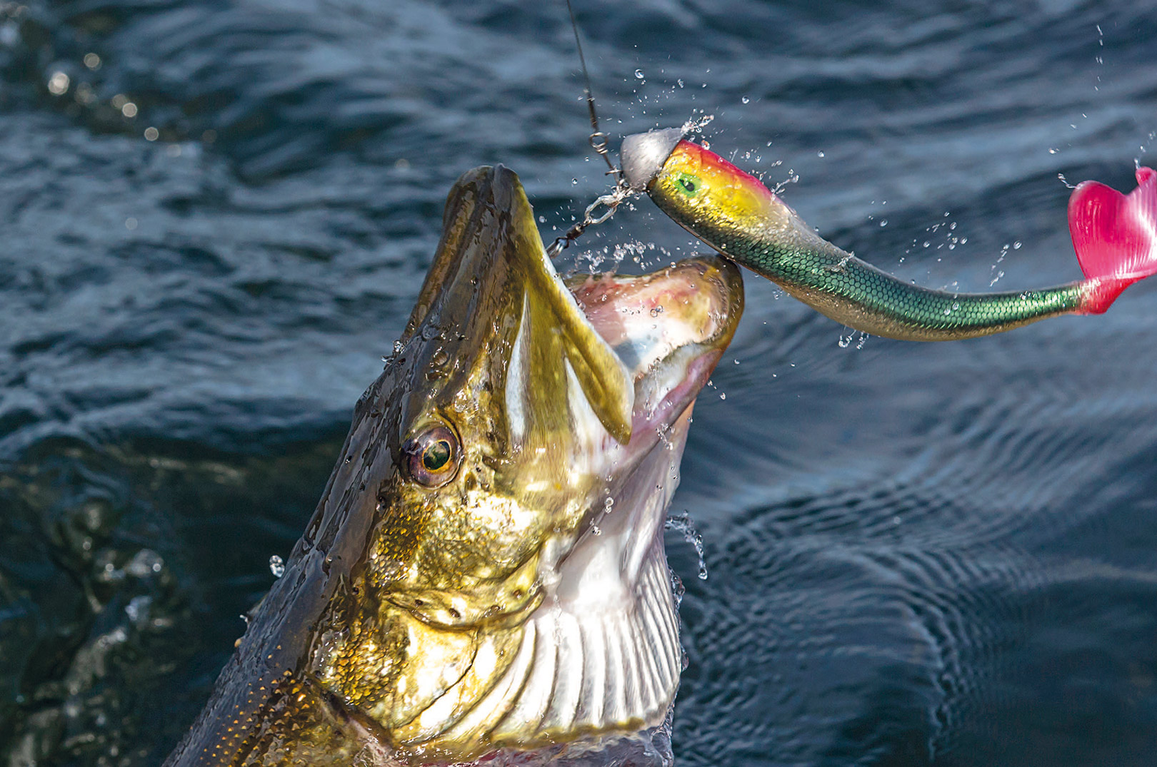 Spar ikke på titaniumwiren. Når fisken kommer i fuld fart fra dybet, er det til tider ikke eng