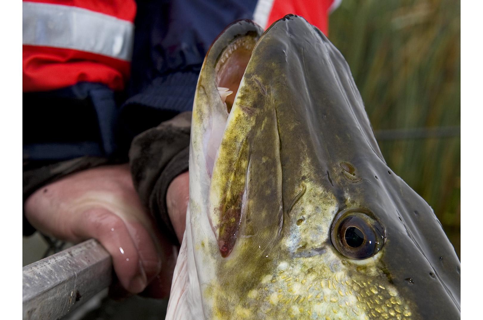 Søfiskeriet er et af de områder der kritiseres for at have været under - eller fejlprioriteret gennem en del år.