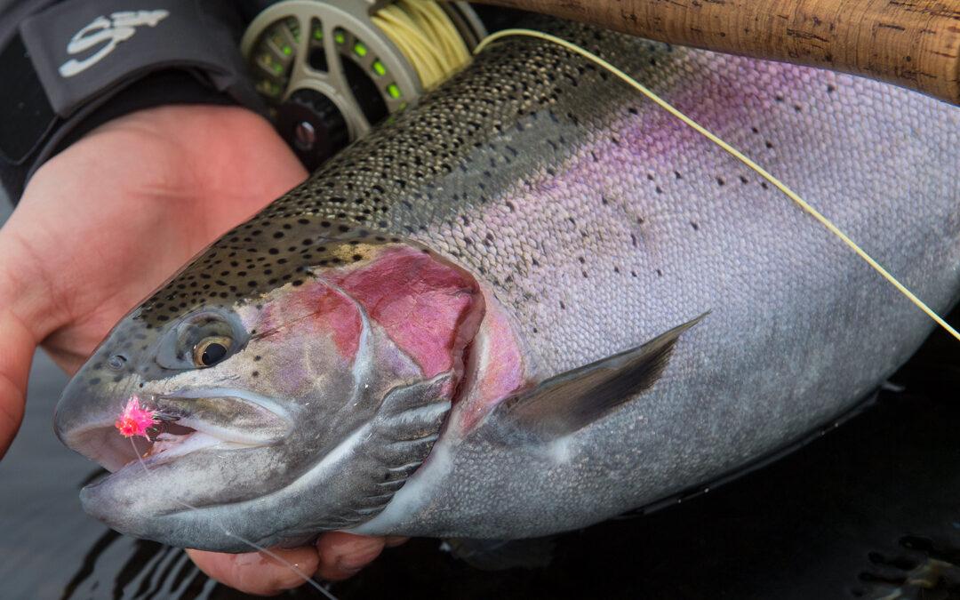 De mange havbrug er den direkte årsag til faunaforurening med regnbueørred langs den danske kyst og helt oppe i åerne.