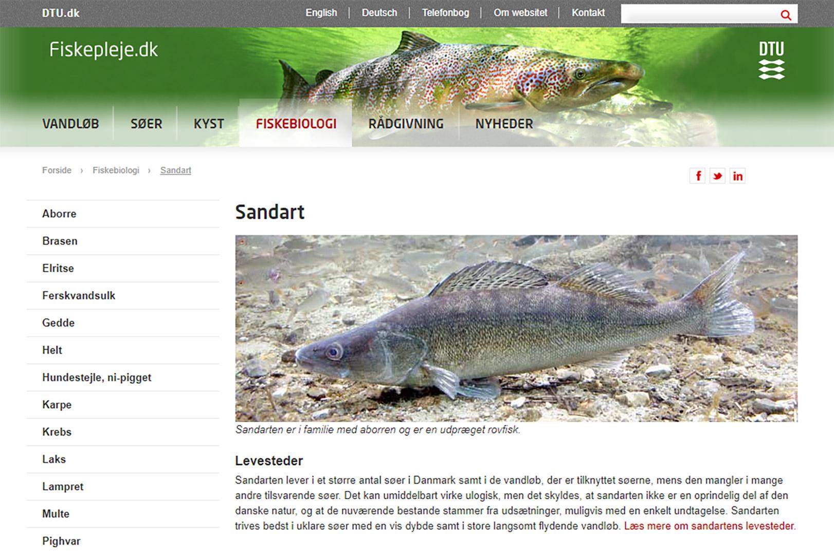 DTU Aqua: Sandarten er ikke en oprindelig dansk art.