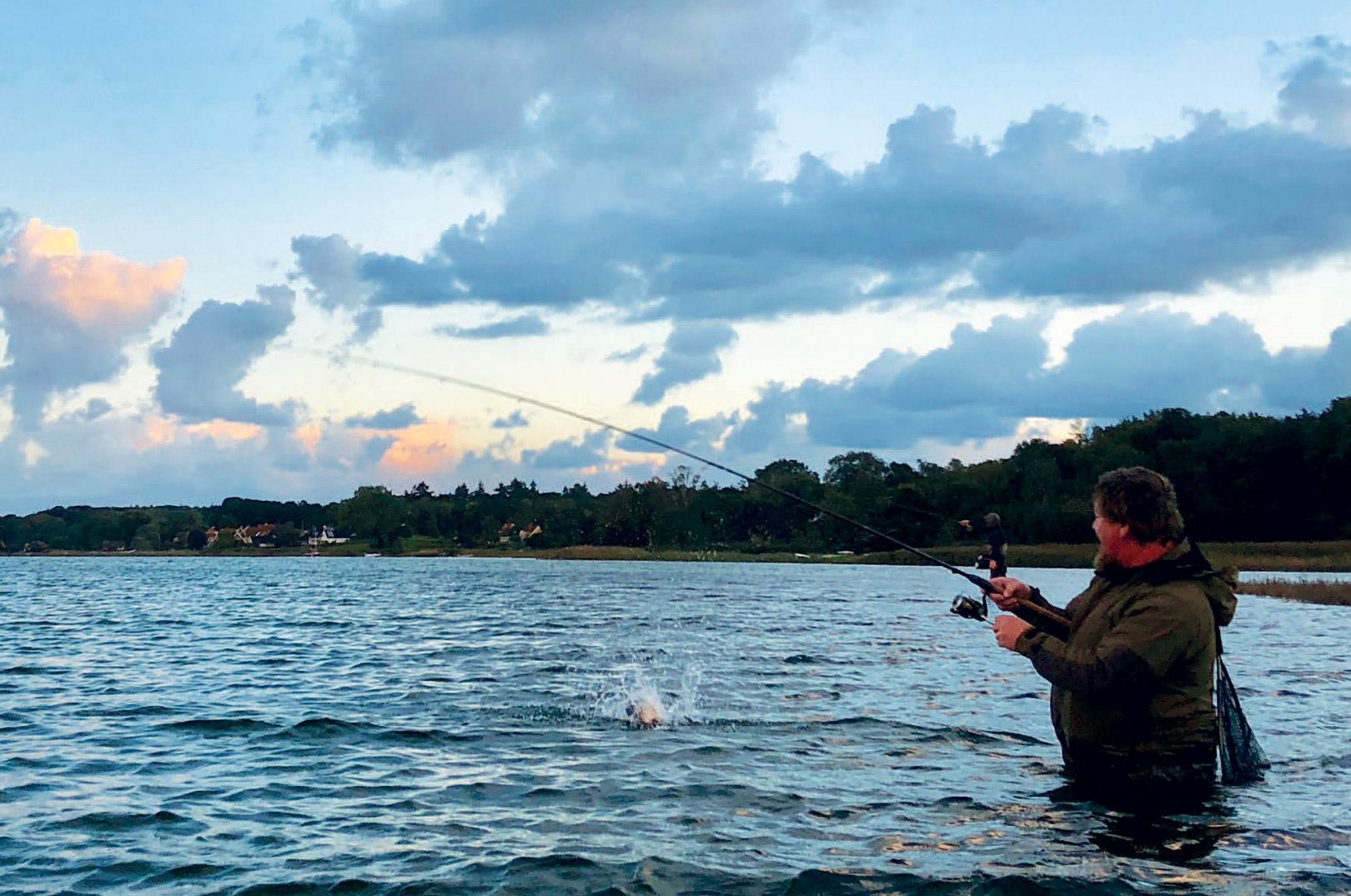 Underholdningen er til at tage og føle på, når ørrederne kæmper i vinter-fjordenes kolde vand.