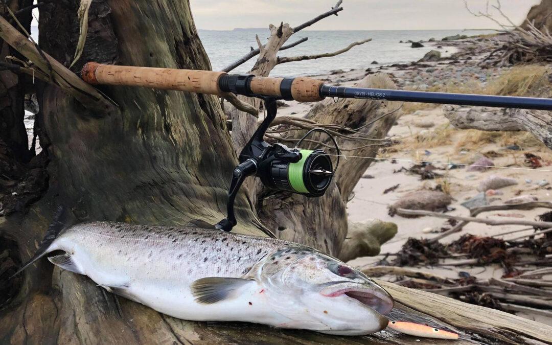 Fiskedagen på kysten gav 10 fine havørreder til Lars Løve Lund - inklusiv denne smukke fisk.