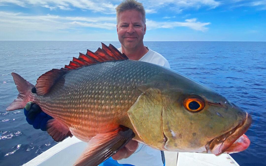 Søremn Vesth men en af de mange fine fisk gruppen tog på Maldiverne