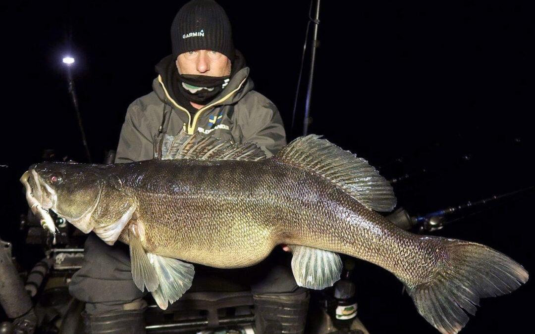 Tommy Blomander med den største af de 100 sandarter over 90 cm: 11,38 kilo!