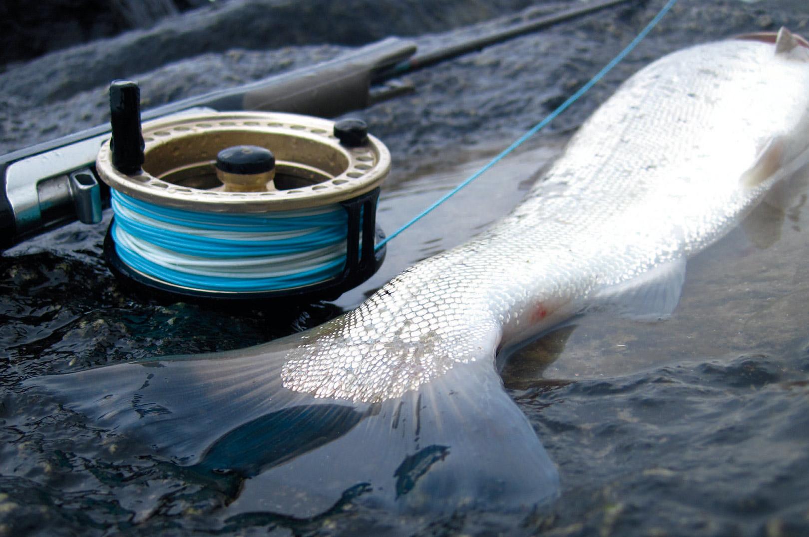 Grejsammensætningen er vigtig, når du skal fiske havørred. Der skal dækkes en masse vand af, og kysteksperterne er ikke i tvivl: Det gælder om at kaste effektivt og opnå god længde med få blindkast.