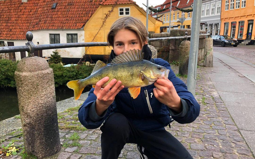 Phillip med sin fine aborre fra Køge Å taget på jig.
