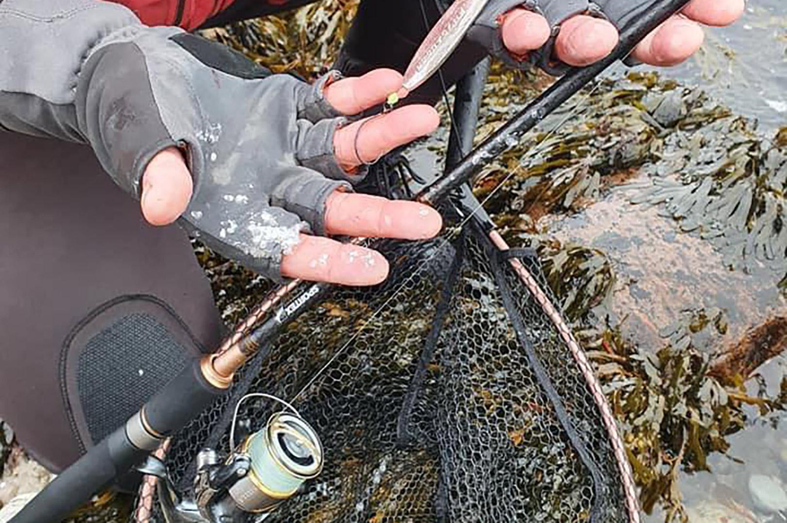 Sølvskæl på finrene er gode tegn på havørred i farvandet