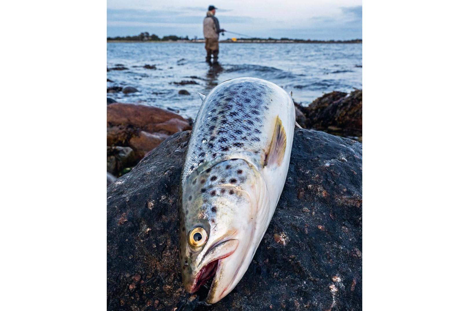 Kystørred smager fortræffeligt - og det at tage en enkelt eller to med hjem til gryden er en helt naturlig del af fiskeriet.