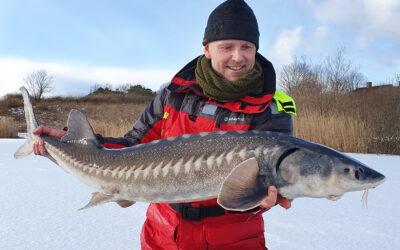 Størfiskeri fra isen
