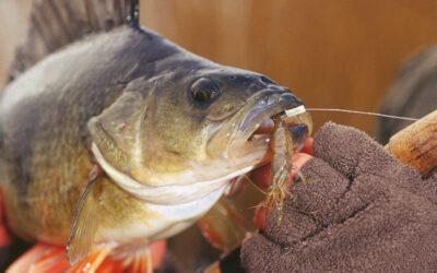 HVAD LAVER FISKERI KONTROLLEN – OG HVOR MEGET KOSTER DET?