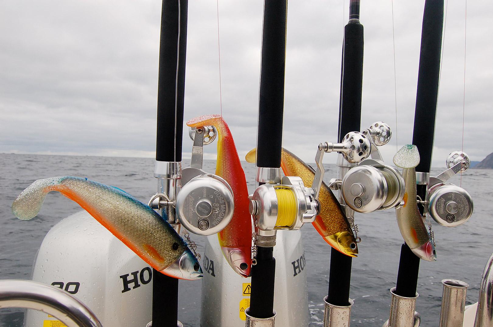 Accurate er det perfekte hjulvalg, når du skal bide skeer med de største og stærkeste fisk - som fx her helleflynder i Nordnorge.