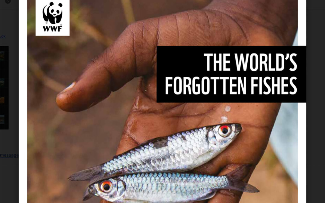 WWW - The Worlds Forgotten Fishes