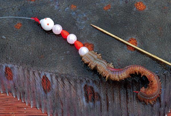 Med en agnnål kan man påføre sine sand- og børsteorm til krogen uden at miste for meget af de gode duftstoffer, der er i ormene.