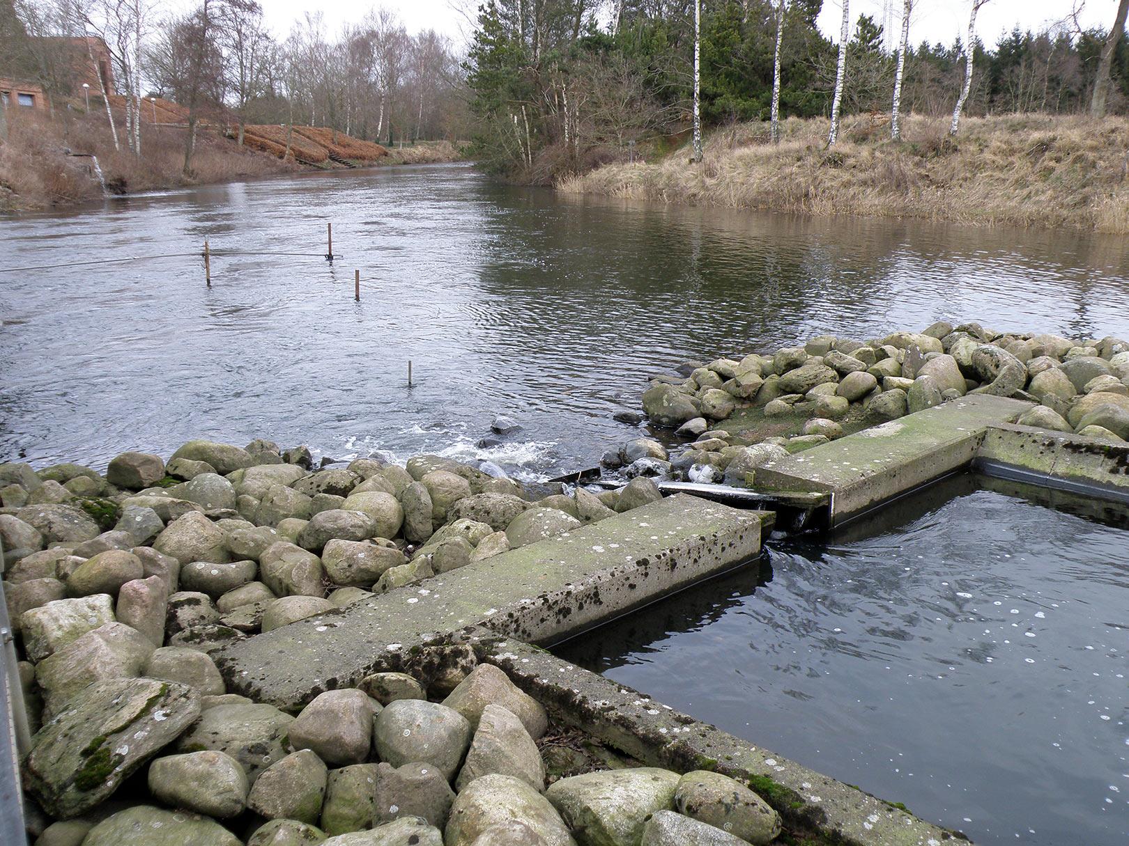 Udløbet fra fisketrappen ved Tangeværket