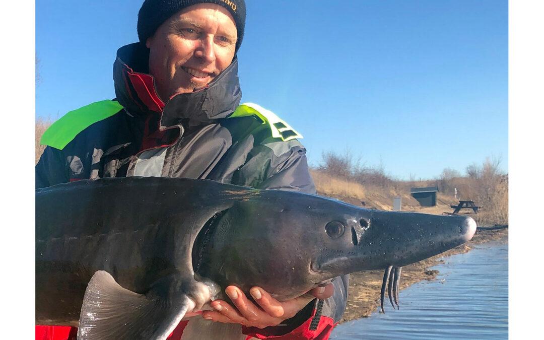 Henrik Carl med sin flotte sibiriske stør fra Nordvestsjællands Fiskepark
