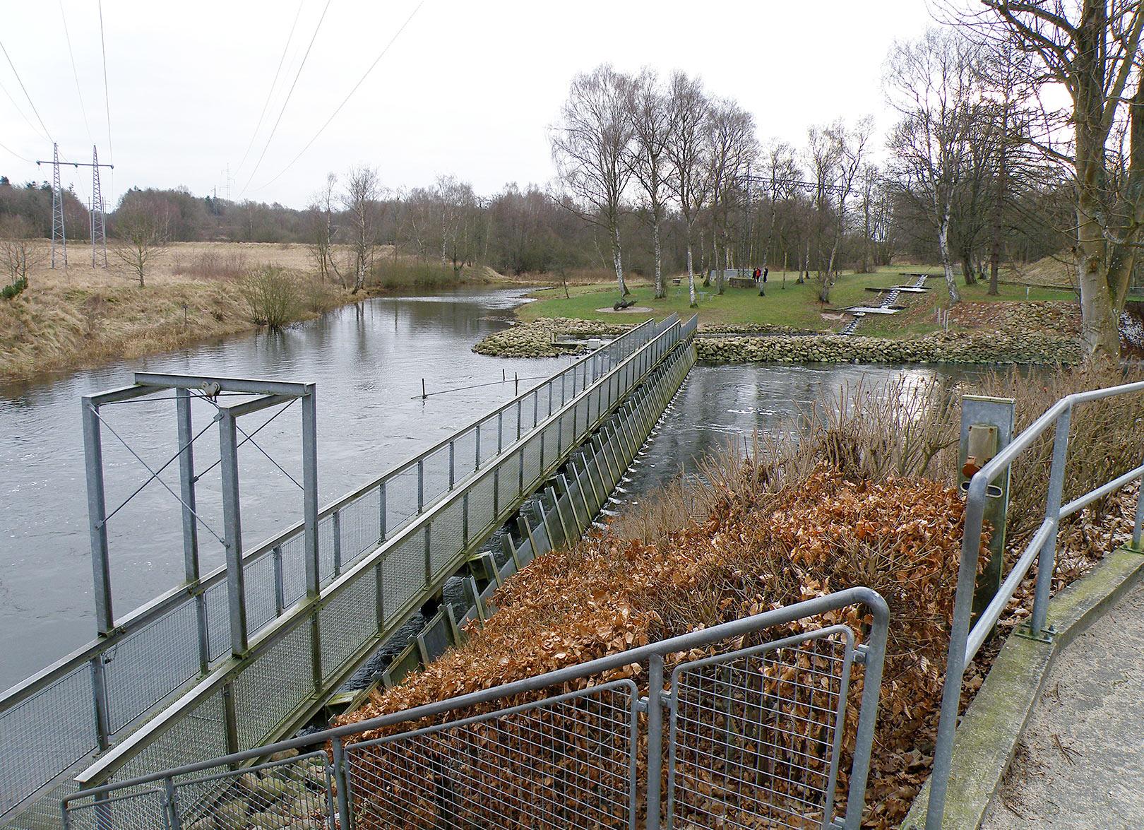 Risteværket foran fisketrappen ved Tangeværket, der spærrer Gudenåens frie løb.