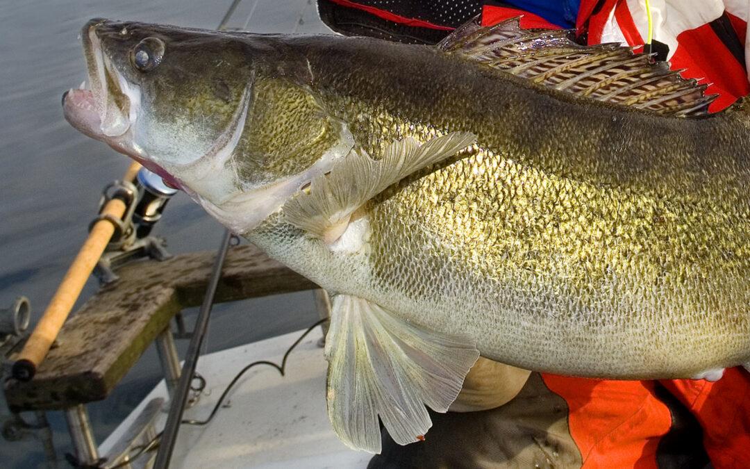 Sandartbestanden er i stor fare for at blive fisket godt ned inden erhvervsfiskeriet i landets største sø - Arresø - forhåbentlig stopoper ved udgangen af 2021.