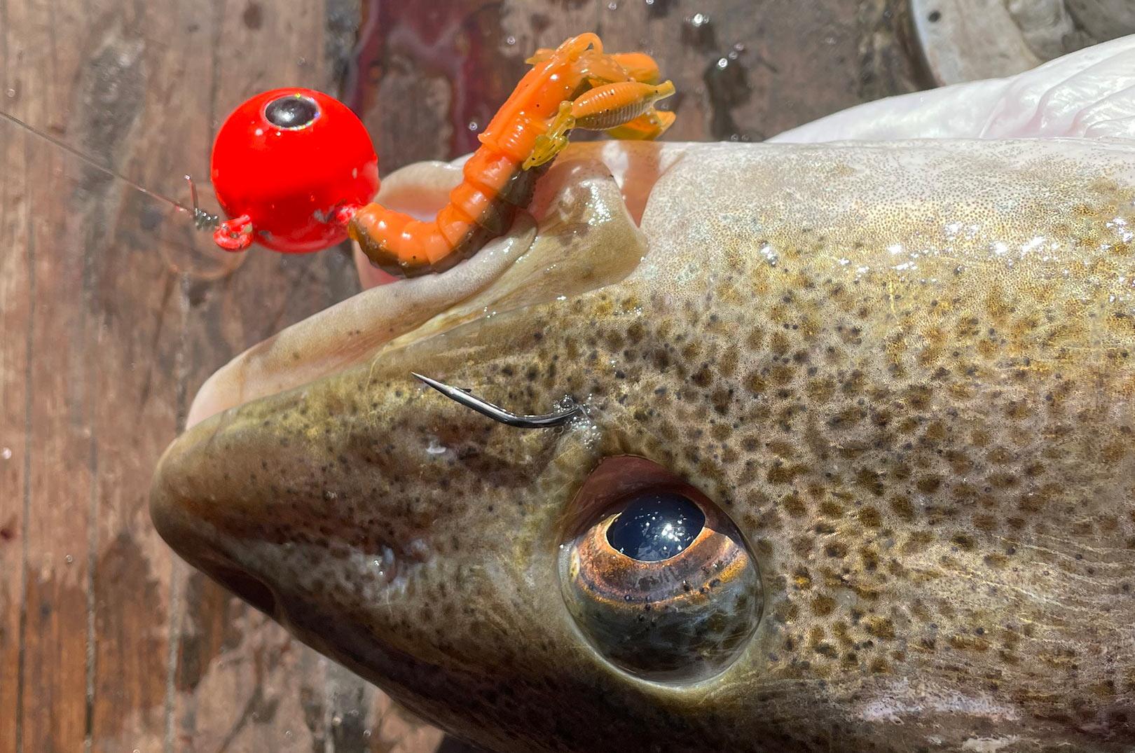 Et rødt jighoved med en CreCraw for enden er ren guf for krabbeædende torsk.