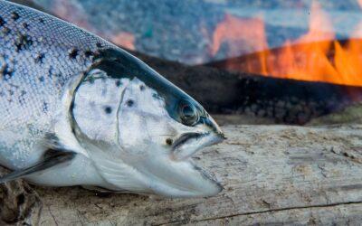 HVORDAN FÅR VI FLERE FISK PÅ KYSTERNE?