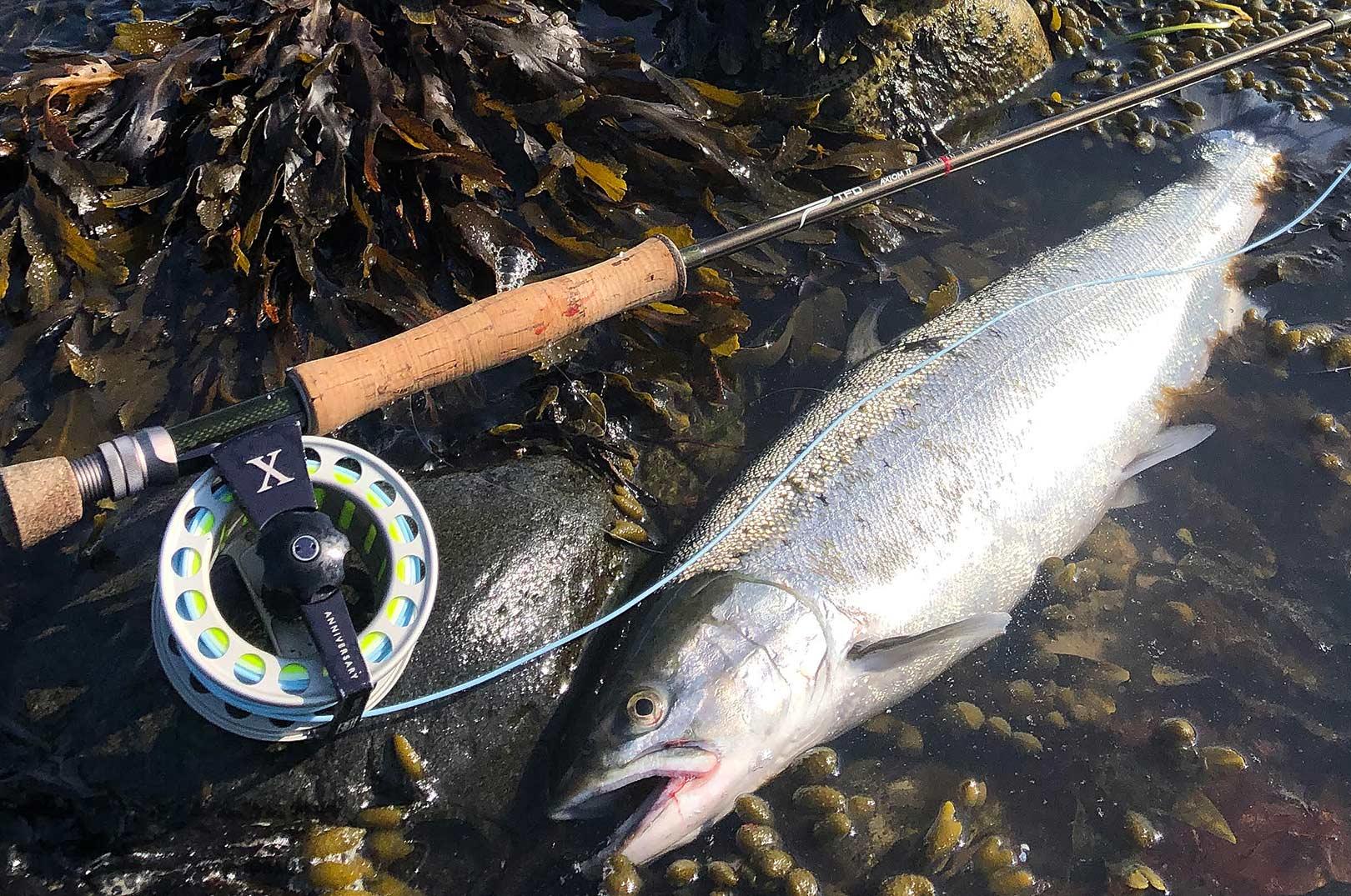 Der var ikke meget action på turen til Samsø, men denne flotte fisk reddede alligevel turen.