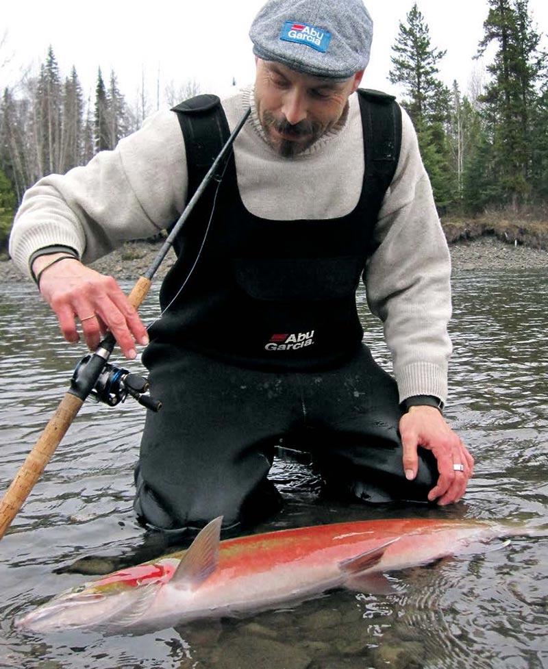 Her er en farvet buck klar til genudsætning i Kispiox River.