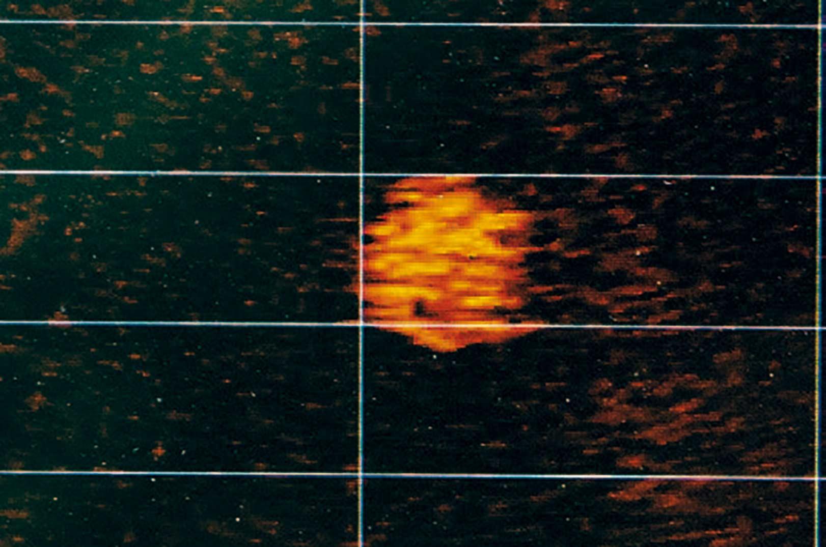 Når en stime føler sig truet af rovfisk i nærheden, stimler de tæt sammen i en kugle - som du kan se her vist med LiveScope.
