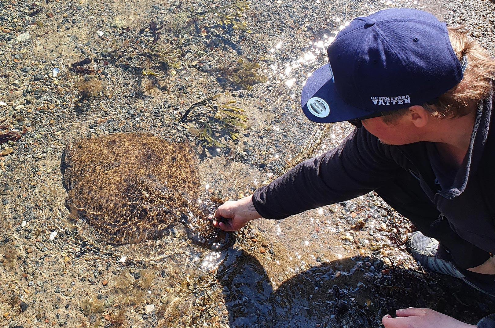 Niclas Carlsson med sin fem kilos pighvar taget på sightfiskeri med vandkikkert og jig.