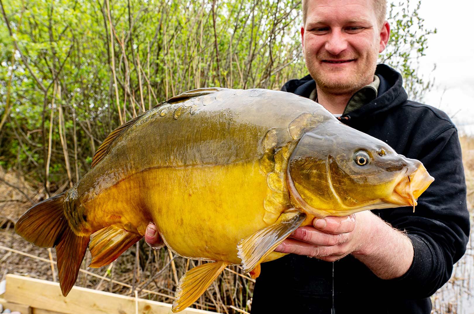 Søren med en af de fine karper fra turen. Øverst Morten Bak med en af sine fine fisk taget på boilies fra CFC-Bait.