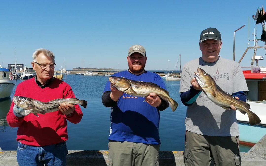 De var ikke store - torskene - men der blev fanget mange af dem på Nakssov Sportsfiskerforenings tur her i weekenden.