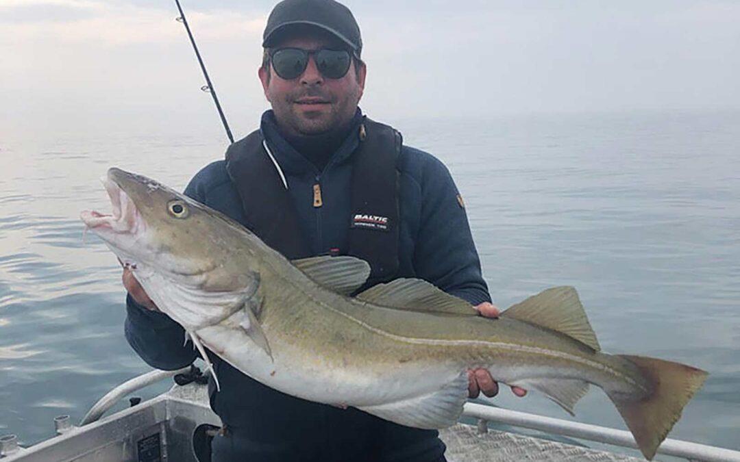 En af de mange fine torsk, der blev taget i går på båden Sally med Fishingbeyond.