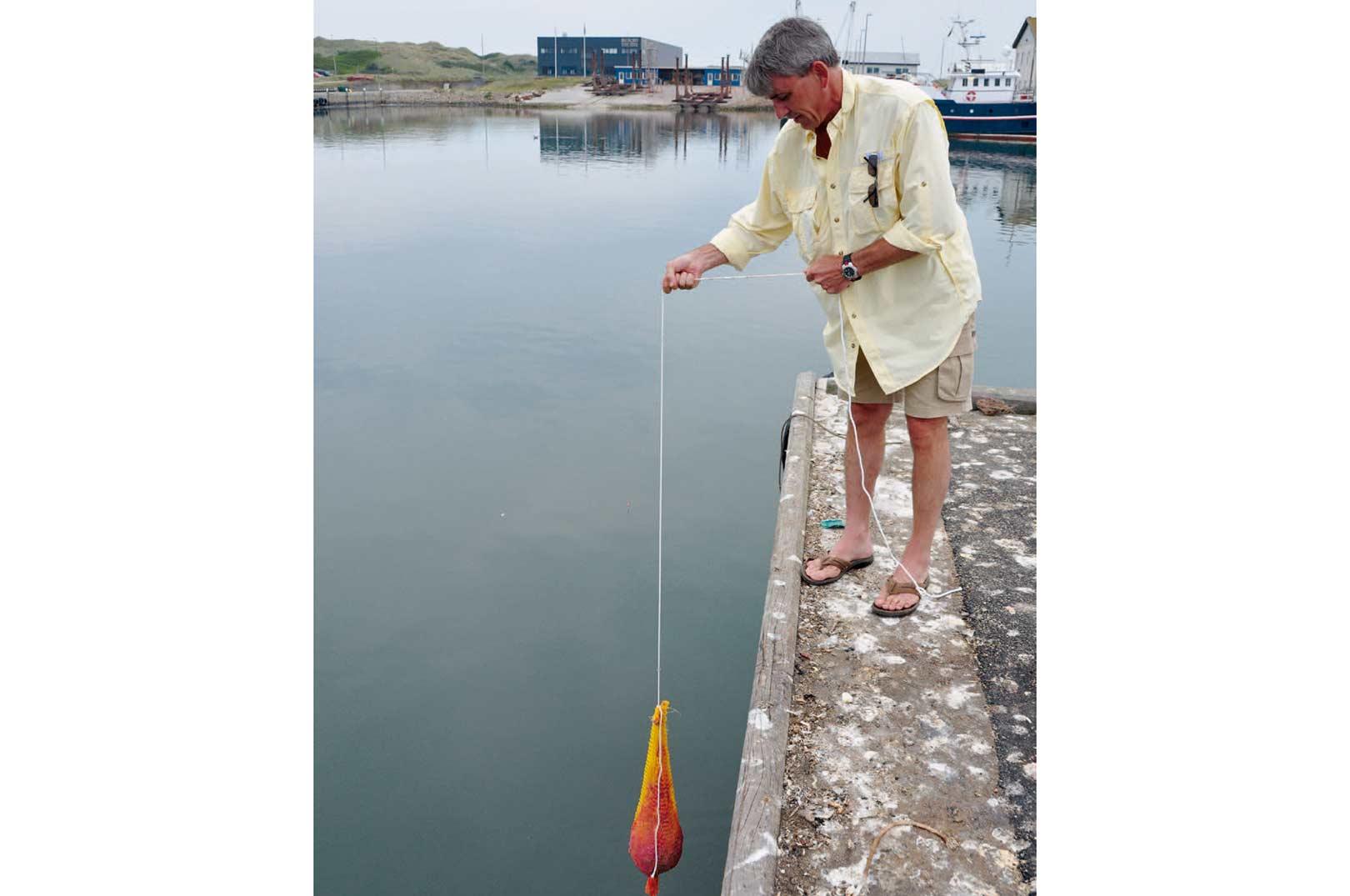 Den særprægede lokkeblanding kommes i en netpose og sænkes ned i vandet. Her i aktion på Hvide Sande Havn for at lokke multerne til.