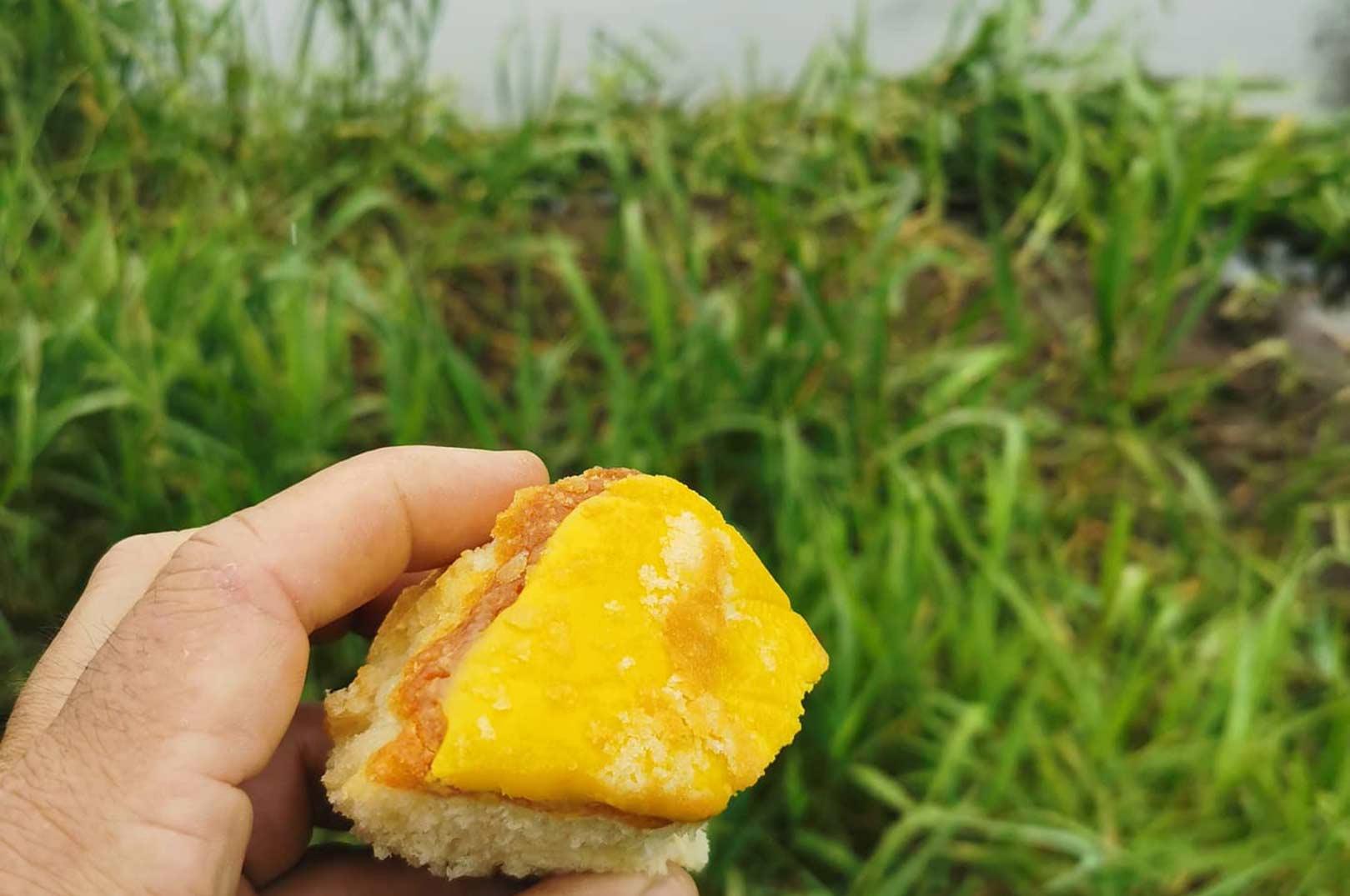 Gå aldrig ned på citronmåne - det kan koste fisk!