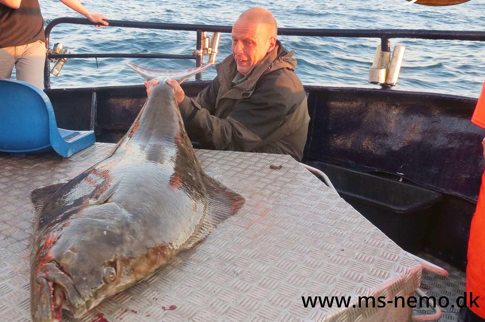 Cirka 32-35 kilo vejede den flotte helleflynder, der tirsdag aften blev landet på Nemo fra Ivans Lystfiskeri. Fangeren var tyskeren Steffen Schultz.