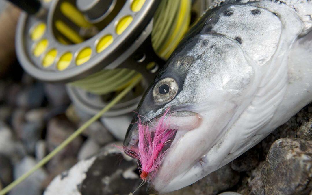 Lørdag den 4 september afholder ALFF fiskekekonkurrencei Halsnæs Kommune