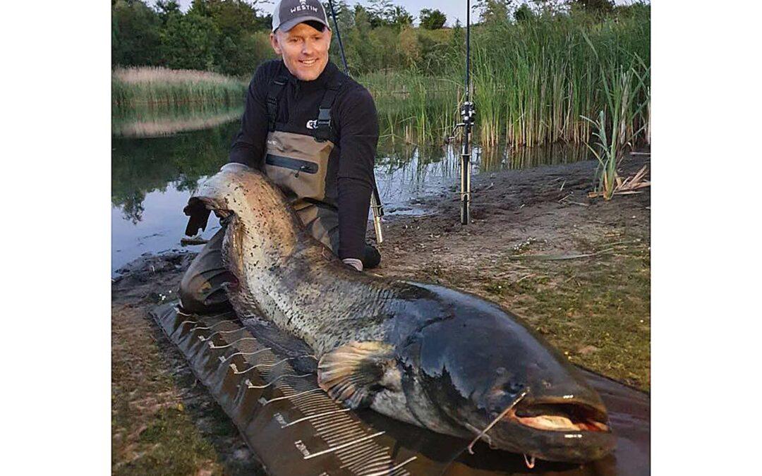 Henrik Carl med sin potentielle DK-rekord malle på 37,5 kilos taget i Roskilde Fiskeland.