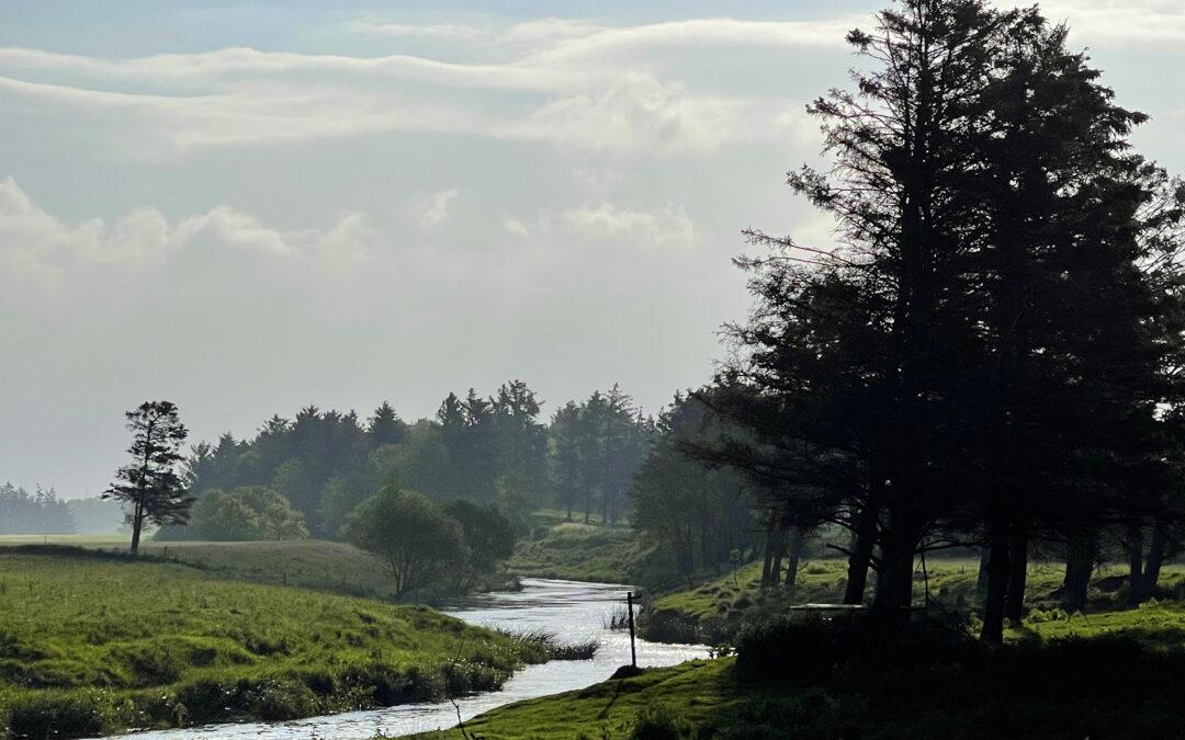Storåen ved Bur er et fantastisk smukt fiskeområde med åbne enge og græssende får.
