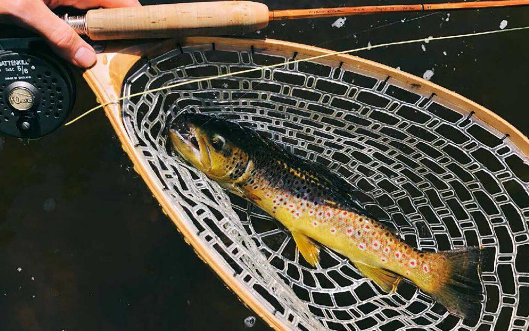 Selvom fisken ikke hører til de største, er det en sjælden udsøgt fornøjelse at fange den på en stang man selv har bygget.